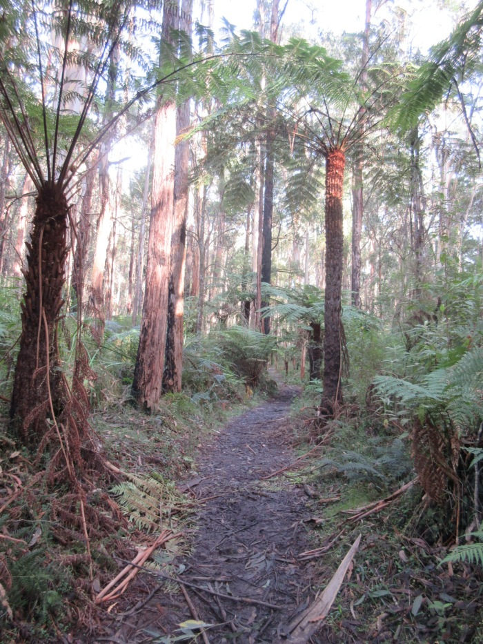 Tree ferns beside the track