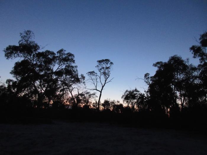 Sunrise at Yellowgums